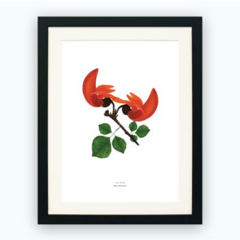 Print – Palash